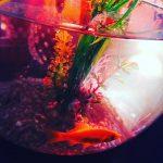 Welcome Bulle  goldenfish newfriend home bulle Lire la suitehellip